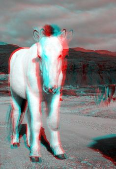 Icelandic horse in 3D.   This image was taken with Kúla deeper in 2013.