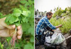 Det finnes mange ville planter i ditt nærområde som er spiselige og kjempegode! Her lærer du mer om mjødurt, strandkarse, brennesle, vill-løk, almenøtte... Cabins In The Woods, Cabbage, Planters, Flora, Fruit, Vegetables, Gardening, Arrows, Edible Plants