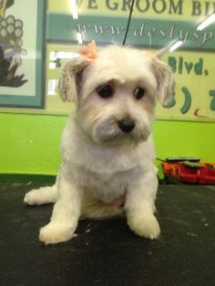#petlovers #grooming #doggrooming #catgrooming #dog #poochie #pet #love #rescue #newlook #cleandog #cleanpooch #cleanpet #healthypet #healthyfriend #bestfriend #buddy #poochlove #pets #woof #paw