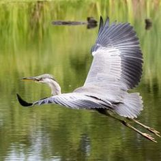 National Geographic Your Shot National Geographic Photos, Your Shot, Heron, Amazing Photography, Shots, Wings, Profile, Inspire, Animals