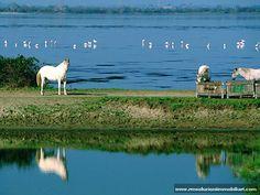 Cavallo del Delta (Po river)