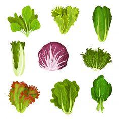 Leaf Vegetable, Vegetable Design, Salad Drawing, Food Drawing, Healthy Salad Recipes, Vegetarian Recipes, Fresco, Vitaminas B9, Vegetarian