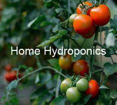 Hydroponics South Africa
