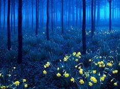 Black Forest Germany- The setting for many Brothers Grimm Fairy Tales.