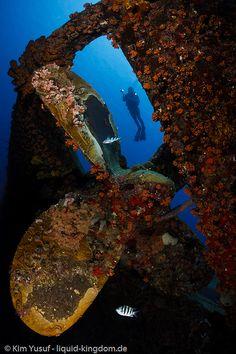 Diving in Bonaire Caribe - beautiful wreck dive