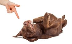 """the point they place a paw on it. Now say Paw, and simply hold your hand out flat. When your dog paws at it, say 'good."""" Reward again. You can now incorporate holding their paw Cool Dog Tricks, Teach Dog Tricks, Dog Hacks, Training Your Dog, Best Dogs, Lion Sculpture, Puppies, Teaching, Pets"""