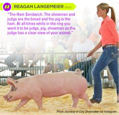Words of wisdom Livestock Judging, Showing Livestock, Animal Projects, Projects For Kids, Hog Farm, Pig Showing, Small Pigs, Pig Farming, Ffa