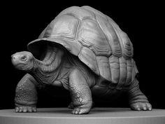 """Artist: Eoin Cannon Zbrush Sculpt """"Turtle"""""""