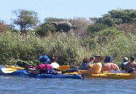 Mvuu Lodge Canoe, Boats, Boating, Ships, Boat, Ship