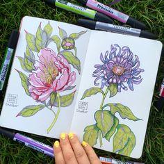 Botanical illustration by Lena Shefter. Peony and chrisantem
