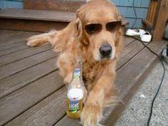 "Golden Retriever ""Kody"" - chillin'"
