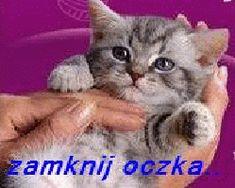 Animowane obrazki i gify na dobranoc: Animowane i gify na dobranoc kotki i pieski Humor, Mood, Dog Love, Text Posts, Humour, Funny Photos, Funny Humor, Comedy, Lifting Humor