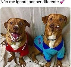 Animals And Pets, Baby Animals, Funny Animals, Cute Animals, Love Pet, I Love Dogs, Cute Dogs, Funny Spanish Memes, Mini Pig