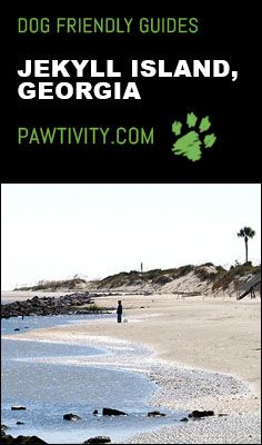 Looking for the perfect dog friendly beach vacation? Jekyll Island, The Perfect Dog, Dog Friends, Best Dogs, Kayaking, Surfing, Vacation, Adventure, Beach