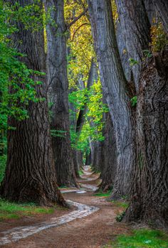 wowtastic-nature:Narrow pathbyAndreas Lang