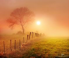 Golden fog - Click image to find more Photography Pinterest pins