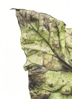 Botanical Paintings watercolor art illustration nature inky leaves plants