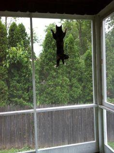 Bird Watching?