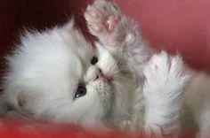 precious xoxoxo
