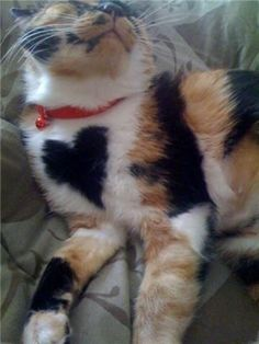 Cat heart. How cool is that!
