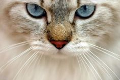 Look Into My Eyes… | Cutest Paw
