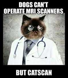 Your Sunday LOLcats (dial-up warning) Chatt Butler Edition - Democratic Underground Take Care Of Your Body, Love Your Pet, Nurse Cat, Have A Great Friday, Friday Humor, I Love To Laugh, Cat Lady, Cool Cats, Funny Cats