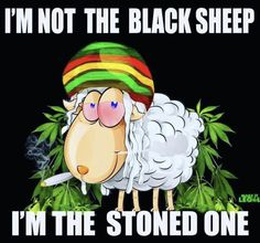 Your global source for the latest marijuana news in Along with the Best CBD products, and a up to date watch on weed legalization. Funny Weed Memes, Weed Jokes, Weed Humor, Funny Quotes, Drug Quotes, Humor Quotes, Badass Quotes, Funny Pics, Inspiration Quotes