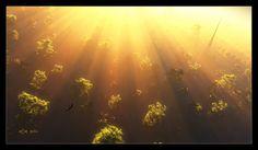 Flight at Dawn by ~ArthurBlue on deviantART