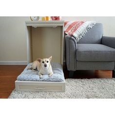 ecoFlex Abigail Murphy Dog Bed with Memory Foam Cushion (ecoFlex Abigail Murphy Bed-Standard Antique White), New Age Pet Cute Dog Beds, Diy Dog Bed, Diy Bed, Pet Beds, Murphy Bed Ikea, Murphy Bed Plans, Modern Murphy Beds, Designer Dog Beds, Dog Rooms