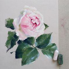 Уже больше двух недель ничего не рисовала. Соскучилась😄 #пастель #роза #цветыпастелью #цветы #softpastel #softpastels #flowers #schmincke