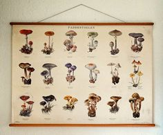 vintage Dutch botanical poster to teach mushroom identification (with Dutch and Latin names) – available at AtticAntics, $145.00
