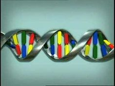 Animation: How DNA Works - YouTube