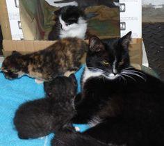 Lotte und die Kätzchen