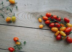 tomatoes gluts and gluttony