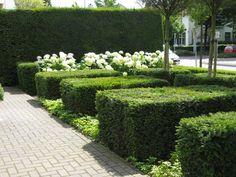 Hoveniersbedrijf Eindhoven Helmond | Roland van Boxmeer Garden, Design & Creation Front Gardens, Formal Gardens, Outdoor Gardens, Modern Landscaping, Landscaping Plants, Landscape Elements, Landscape Design, White Flowering Plants, Architectural Plants