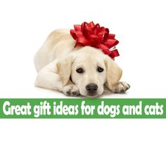 Great gift ideas for dogs and cats From time to time, we like to spoil our pets by giving them prezzies – whether it's someones birthday, the pet's birthday or just something to keep them occupied with when you're not home. With Christmas just around the corner, I though to write a post on great gift ideas for dogs and cats and some things to try to avoid.  http://www.vet-portshepstone.co.za/great-gift-ideas-for-dogs-and-cats/