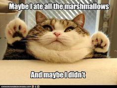 looks like my fat cat