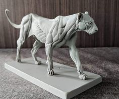 Lion Anatomy, Animal Anatomy, Anatomy Drawing, Anatomy Art, Anatomy Sculpture, Sculpture Art, Animal Sketches, Animal Drawings, Lion Sketch