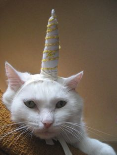 Unicorn Costume for Cats. Sweet <3