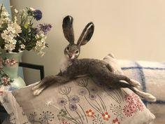 Reclining Hare/Hare sculptuur/Felted konijn/voelde dieren/jack | Etsy Needle Felted Animals, Felt Animals, Needle Felting, Beautiful Rabbit, Rabbit Sculpture, Jack Rabbit, Light Covers, Sheep Wool, Hare