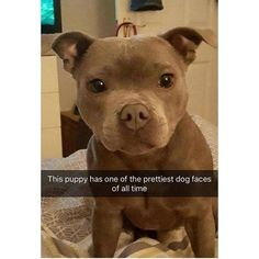 Ideas for funny cute animals pictures doggies beautiful cutest funny wild basteln lustig zeichnen Cute Little Animals, Cute Funny Animals, Cute Dogs, Cute Babies, Cute Puppies For Sale, Cute Animals Puppies, Funniest Animals, Cutest Animals, Funny Cute