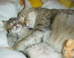 Google Image Result for http://mysterycreature.files.wordpress.com/2010/06/cat-hugs.jpg%3Fw%3D460