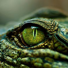 'Eye of the Crocodile', photo by Damienne Bingham (from Brisbane, Australia), via Redbubble
