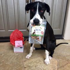 Miss Lady first grabbed our hearts for her wonderful work as a service dog, but now we consider her a loyal fan and part of the Bark at the Moon family! Click the pin to find out about Miss Lady's favorite snack!