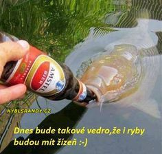 Funny 2014 How to Catch A Fish in Ireland. enjoy the best of lol and funniest meme and humor from here. Funny 2014 How to Catch A Fish in Ireland Funny Animal Pictures, Funny Photos, Funny Animals, Hilarious Pictures, Funny Captions, Funny Memes, Animal Captions, Funniest Jokes, Irish Memes