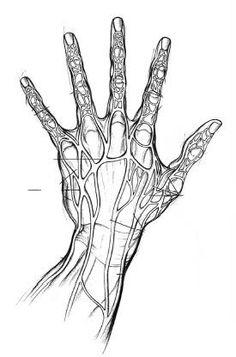 Veins anatomy