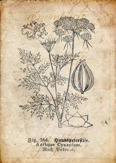 Botánico Vintage floral plantas papel antiguo por MemoriesPictures
