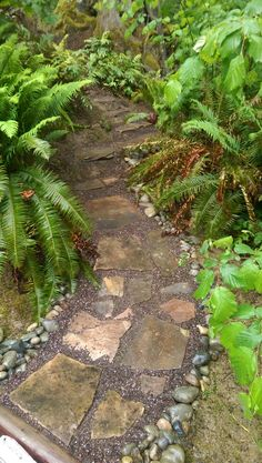 Walking trail before the ground cover is planted