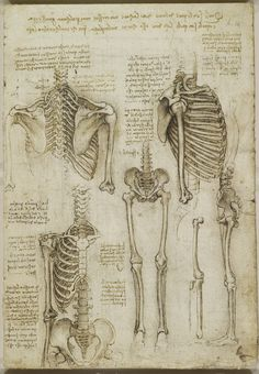Recto: two studies of the thorax, showing the spinal column and upper arm; the bones of a figure from the neck to the pelvis; the skeleton of the pelvis and the legs; the bones of a right leg; notes on the drawings.