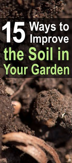 15 Ways to Improve the Soil in your Garden